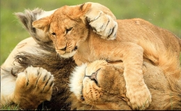naturaleza leon